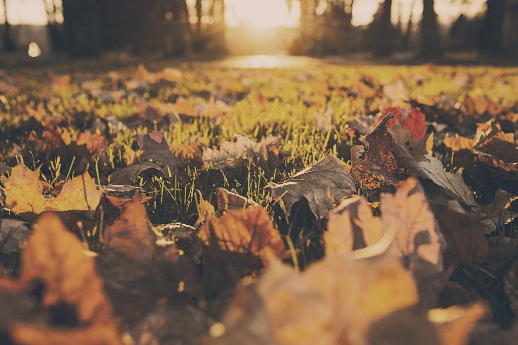 jesien-liscie