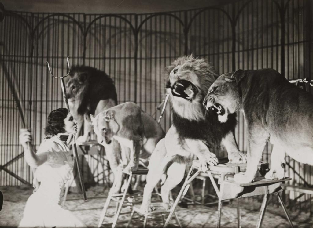 ujarzmij-zwierza