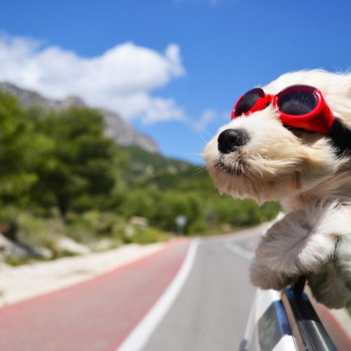 pies podczas podróży